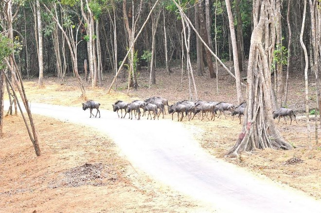 can-canh-vinpearl-safari-phu-quoc-tam-co-nhat-viet-nam-hinh-5